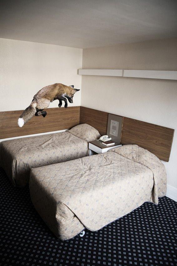 Animalarium Sunday Safari Interior Invasions