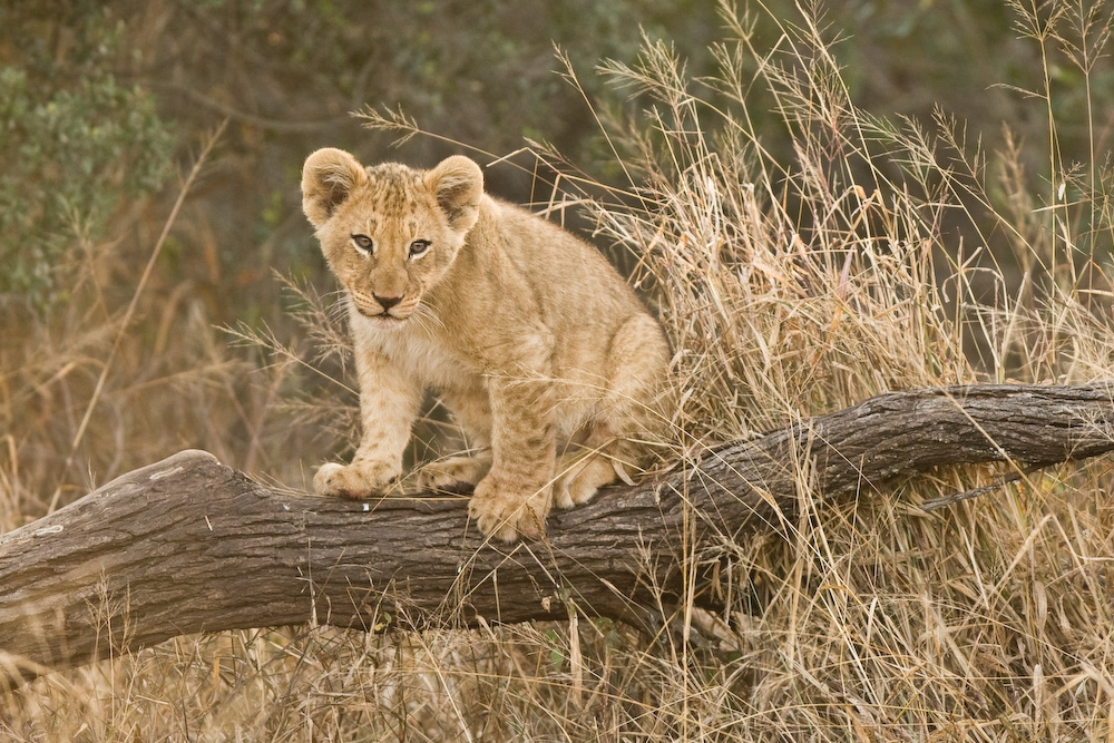 Wildlife Animals Pictu...