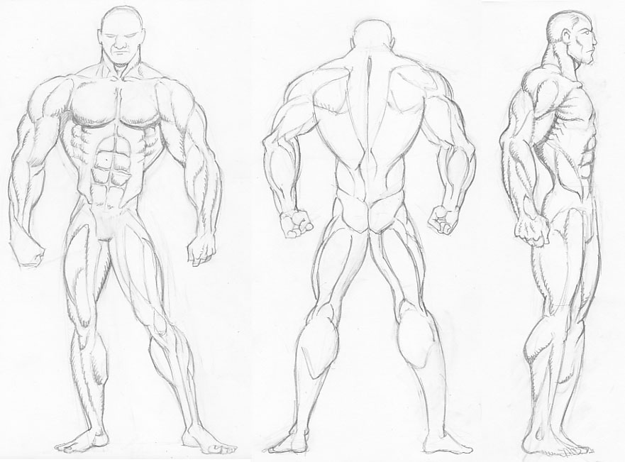 El c clope bizco dibujos anatom a for El dibujo de los arquitectos pdf