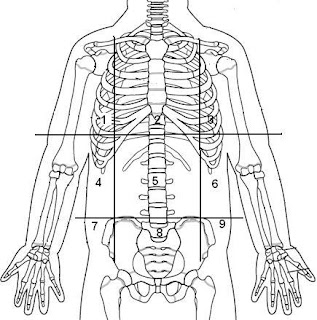 Quick Tips on the Surface Anatomy of Our Body