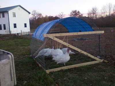 Antiquity Oaks New Poultry Tractor