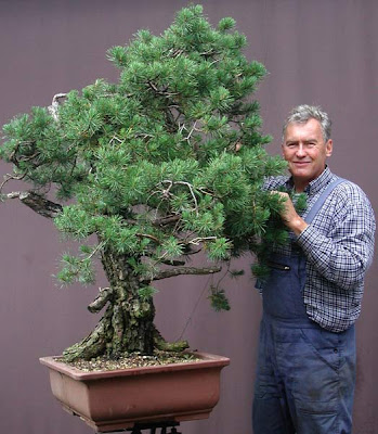 Walter Pall Bonsai Adventures Repotting Of The Big Scots Pine Part 3
