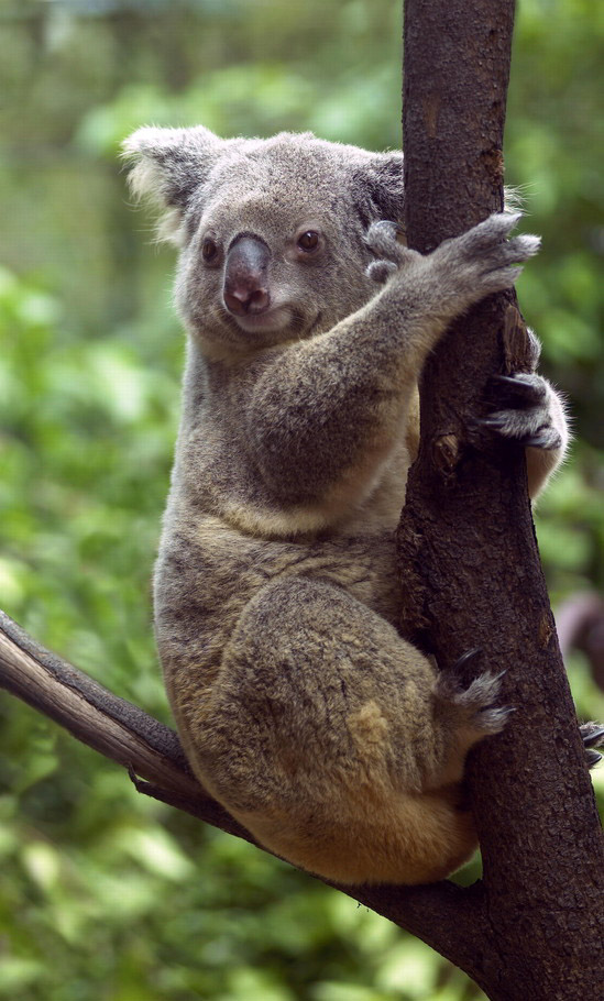 Pieroblog australia for Australian rainforest