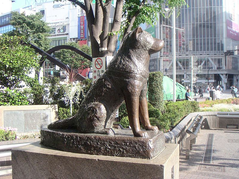 800px-Hachiko200505-4.jpg