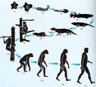 Комментарий на Украинским школьникам не дадут альтернативу теории происхождения человека от обезьяны.