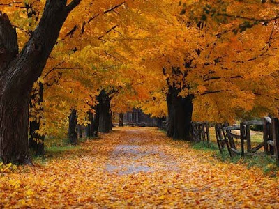 Autumn: Burlington, ON, Canada :: All Pretty Things