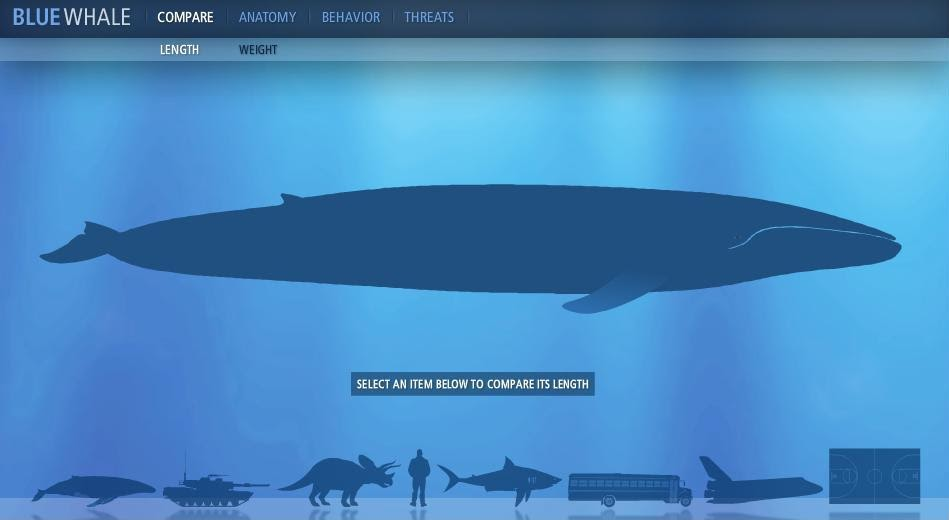 MIW --- Men in Web: blue whale facts