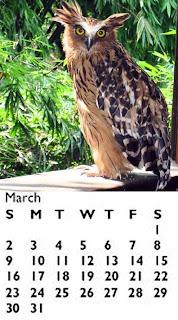 Hooters Girls Calendar 2008