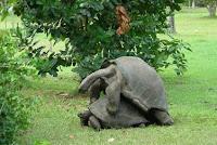 Turtle Love - Making Love in a Garden