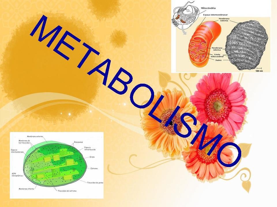 Aquí es whay usted debe hacer sobre metabolismo anaerobico alactico