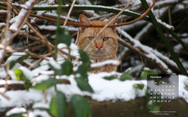 free December 2010 desktop wallpaper calendar, hunting cat in snow - Click on image to view full size, then RIGHT CLICK to save as desktop wallpaper