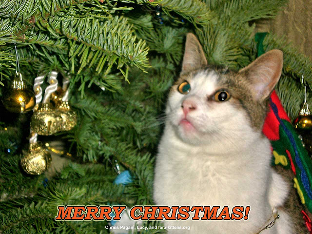 Lucy the Christmas Cat wishes you a merry Christmas