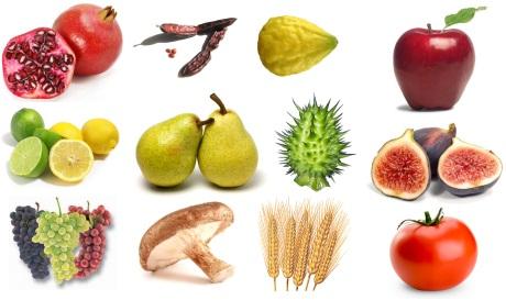 verboden vruchten uit eden