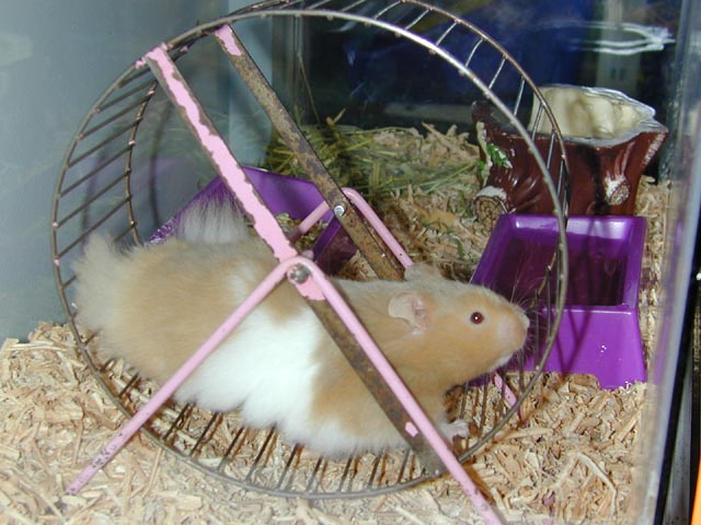 Image result for pic of hamster on a treadmill