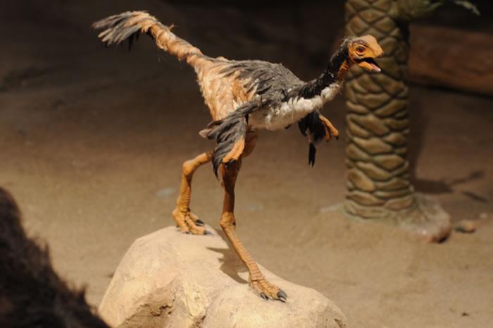 MEF - Museo Paleontológico Egidio Feruglio en Trelew