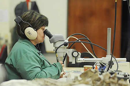 Laboratorio de Paleontología