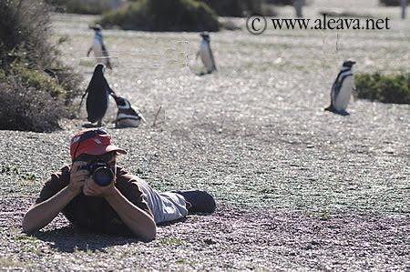 Fografiando Pingüinos en la Estancia San Lorenzo