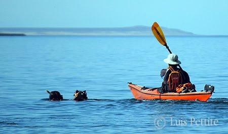 Fotografiando Kayak de Mar en Península Valdés