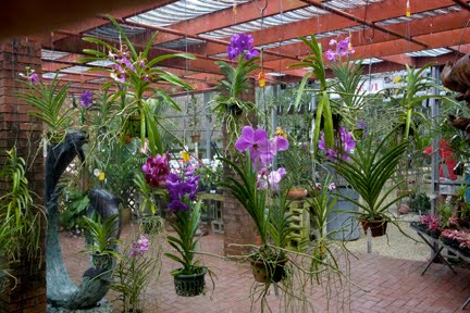 Row Upon Of Orchids Heaven