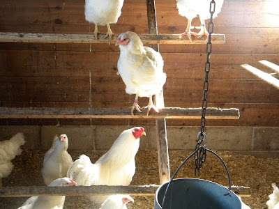 Harvest Kitchen Sisters: Have turkeys? Will Travel