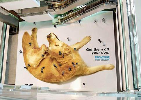 cachorro, shopping, pulgas, anúnicio