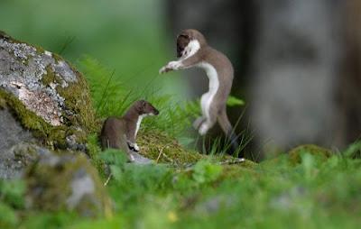 incredible wild animal