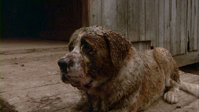 The Horror Digest Cujo Or That Time I Rescued The