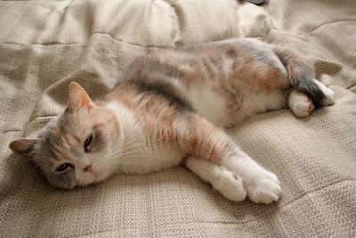 Kissa Pissaa Sänkyyn