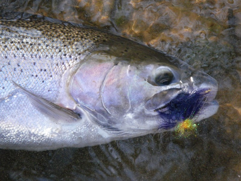 Michigan swinging - Two Handed Rods - Maine Fly Fish