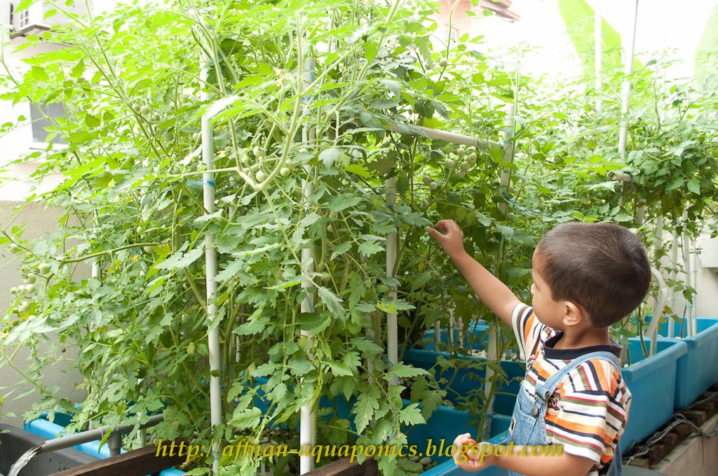 Small Scale Aquaponic Food Production Pdf Un