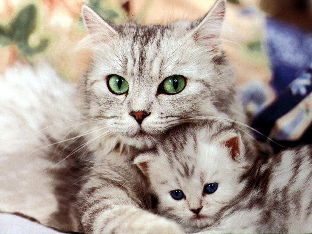 Ivanildosantos Gambar Kucing Yg Lucu