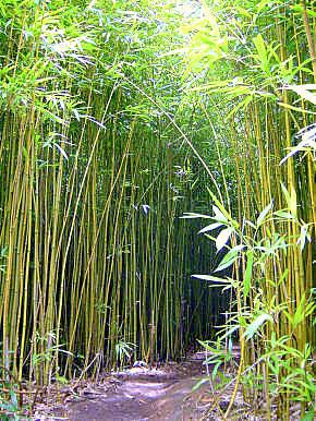 Empresas en per ganaderos de san mart n reforestar n - Suelos de bambu ...