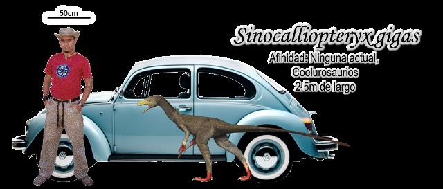 Sinocalliopteryx gigas a escala