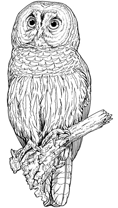 retro owl coloring pages | Retro Owl Clip Art