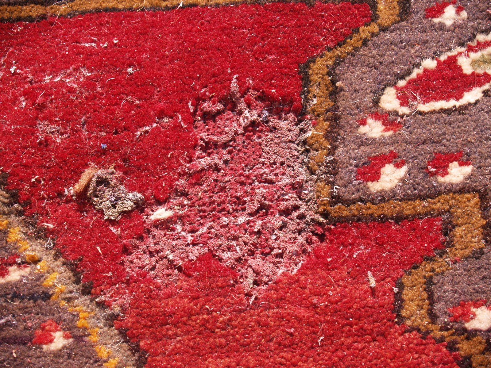 Rug Master Moth Damaged Rugs Carpets A Party At Your