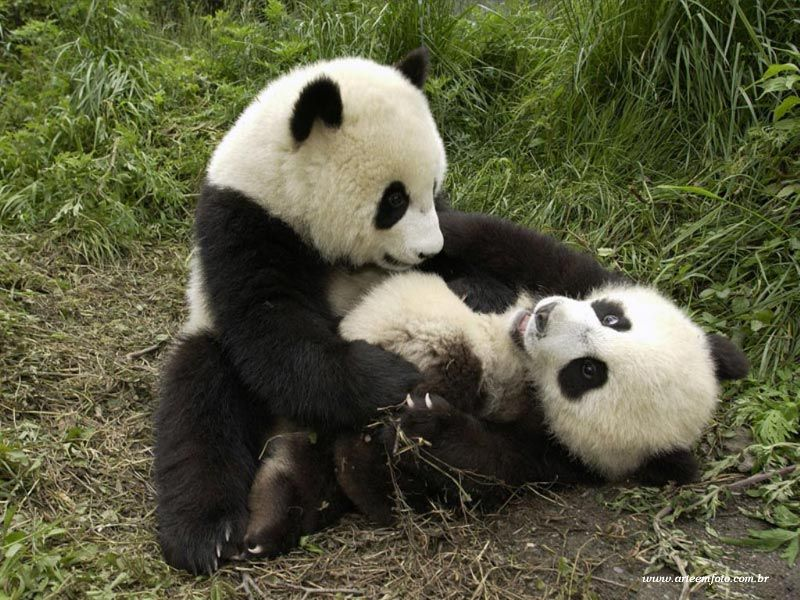 Imagenes De Pandas Animados