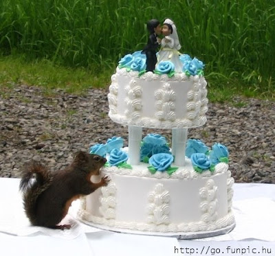 10 weirdest wedding cakes free pics the weirdest wedding cakes 10017
