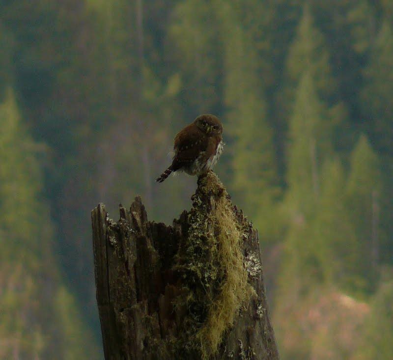 Snowy owl makes rare appearances in Oregon, stumps ...  Owls Portland Oregon