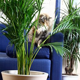 Le monde des chats for Plante toxique chat