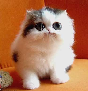 Gatosfofinhos Fotosvideosengracados