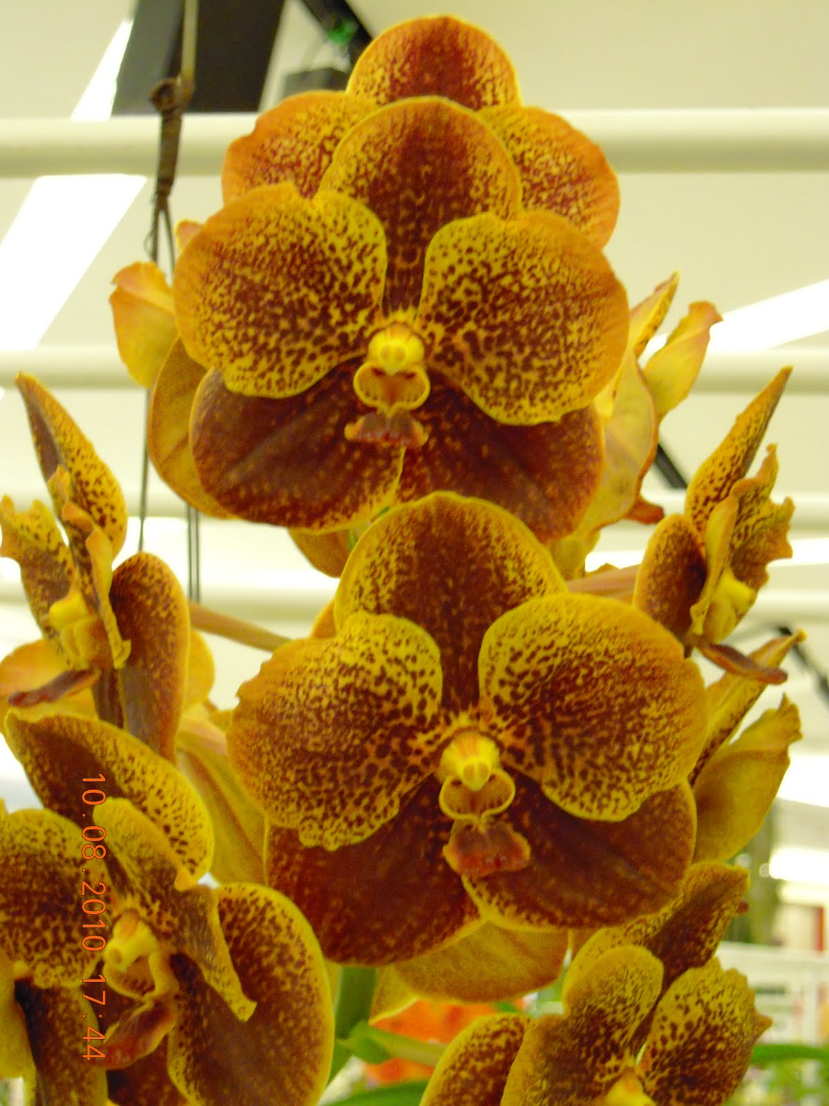 Green And Brown Living Room Decor: UMI & TSURU: Green And Brown Orchid Blooms