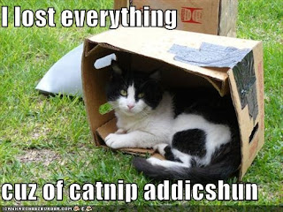 picture of a cat laying in a box..has a caption about catnip addicion