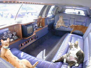 photo of some cats lounging around inside a limo