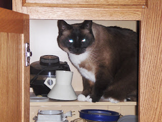 photo of Koko in the cabinet