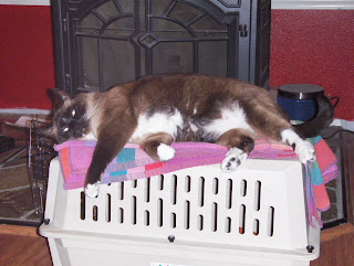 photo of Koko laying on his cat carrier