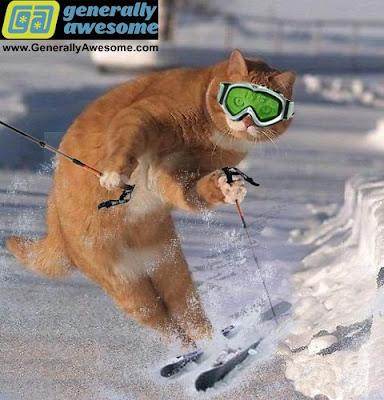 photo of a cat skiing