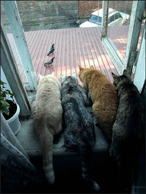 photo of a 4 cats looking out a window at two pigeons