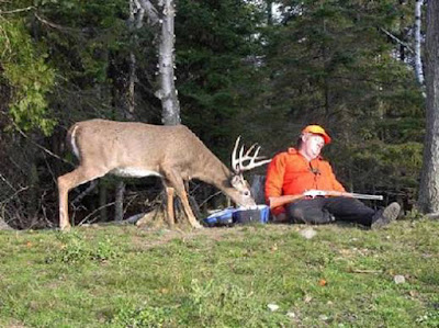 photo of a deer eating from a hunter's lunchbox