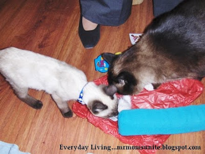 koko and yum yum playing with their new toys