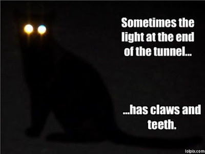 photo of a black cat with glowing eyes